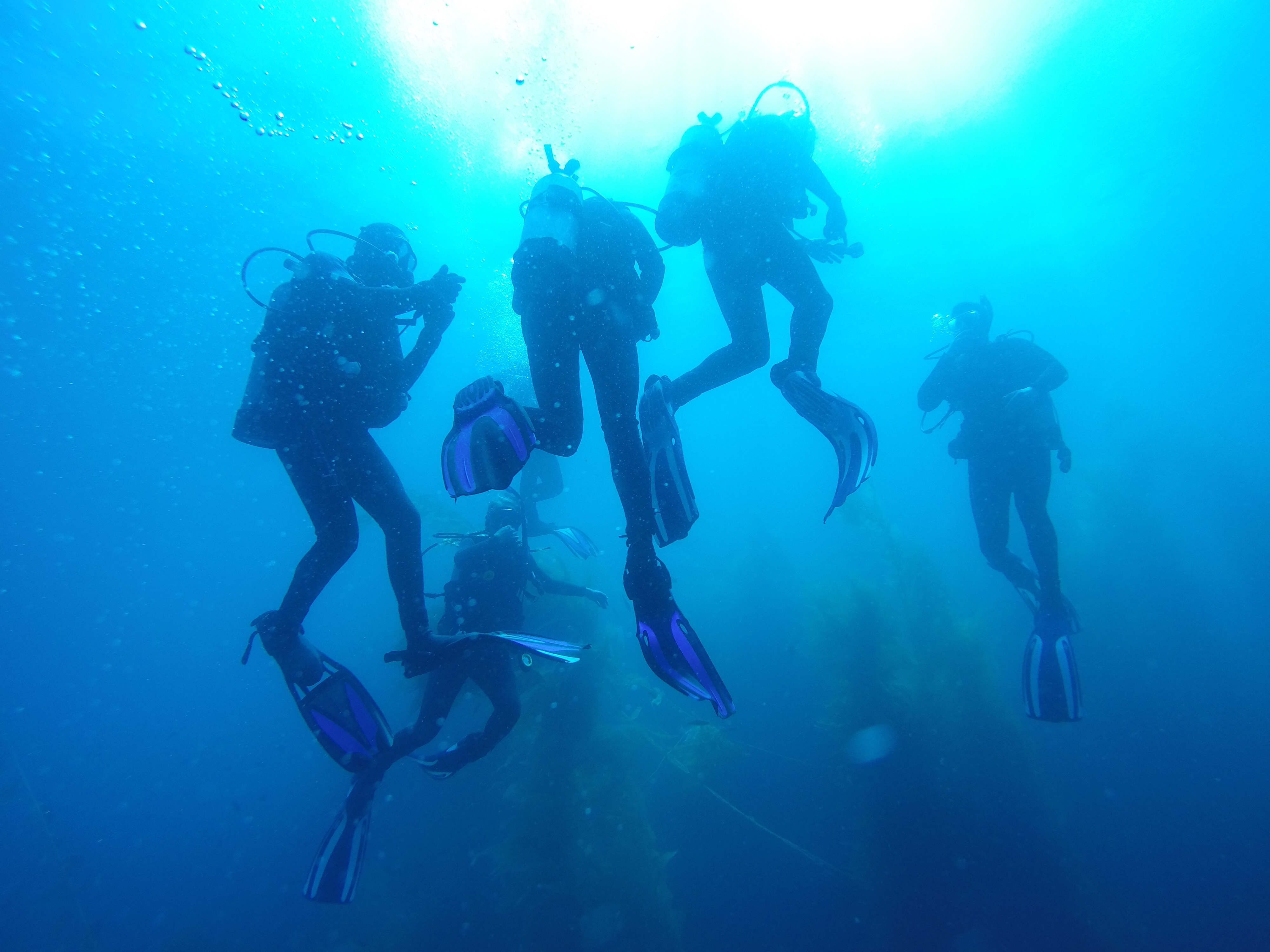 CLU Dive Club Takes The Plunge To Explore Catalina Island