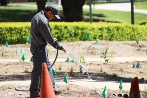 Spring has sprung: Groundskeeper Alberto Ramos waters the native plants near the Pearson Library individually to make sure each gets the proper amount of water. The garden project is still a work in progress. Photo by Arianna Macaluso - Photo Editor