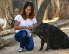 Bubbles accepts food and praise from Angelika Pasion. She made time for photos with encouragement from her trainer Katie Adams, a Moorpark College student in exotic animal training and management. (Photo by Brian Stethem '84)